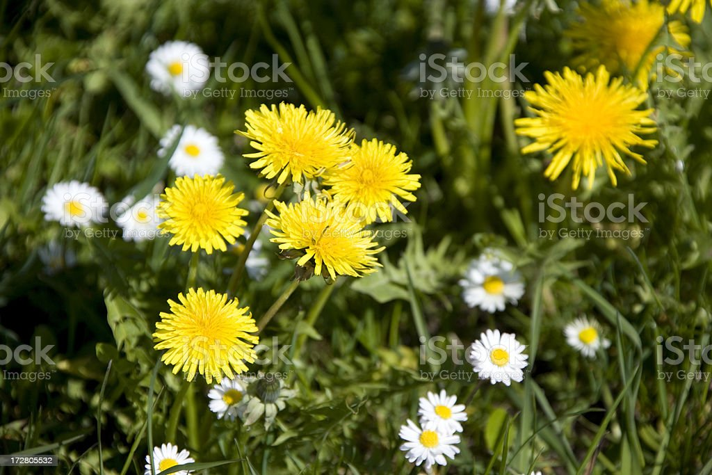 spring flowers royalty-free stock photo