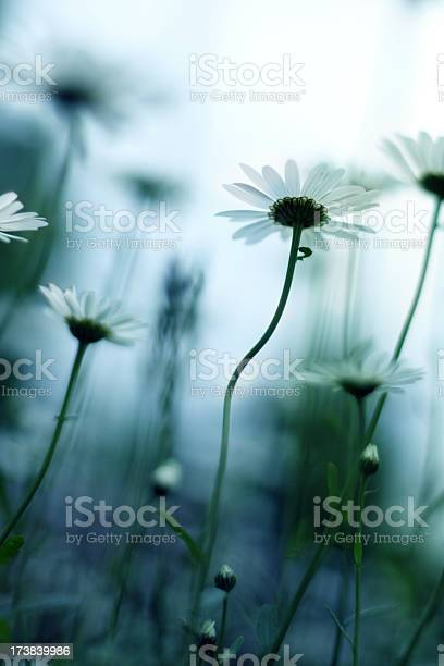 Spring Flowers Stock Photo - Download Image Now