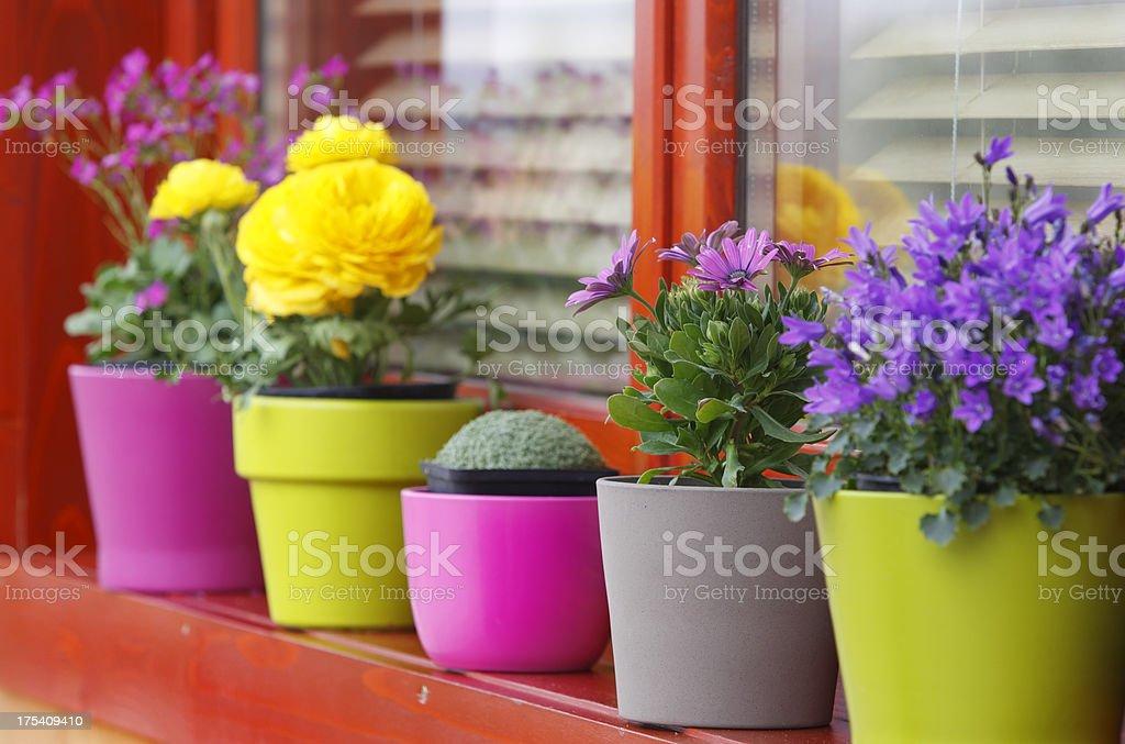 Frühling Blumen – Foto