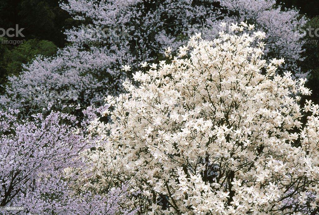 春の花 ストックフォト