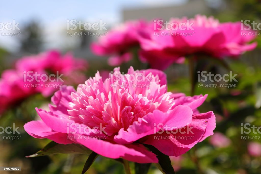 Spring Flowers Stock Photo More Pictures Of April Istock