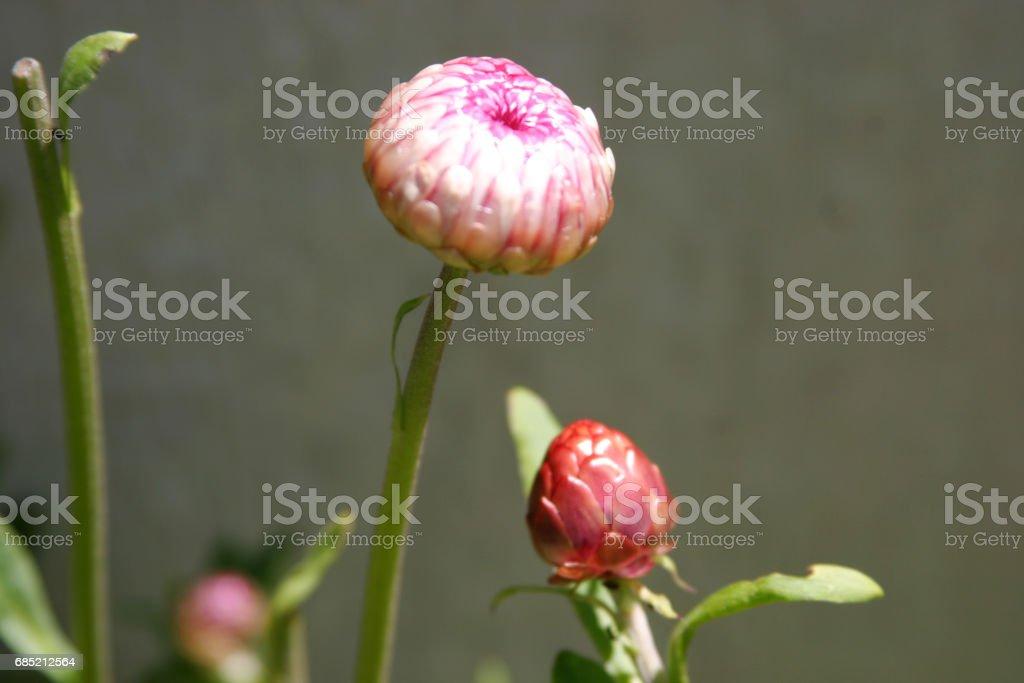 Spring flowers foto de stock royalty-free
