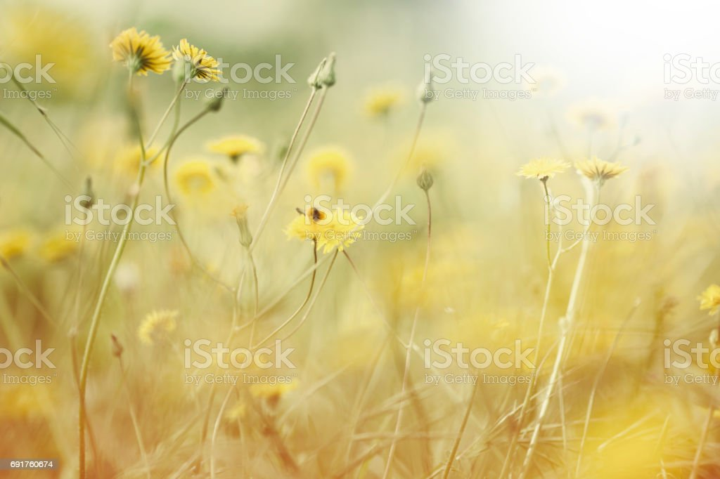 Spring flowers - foto stock