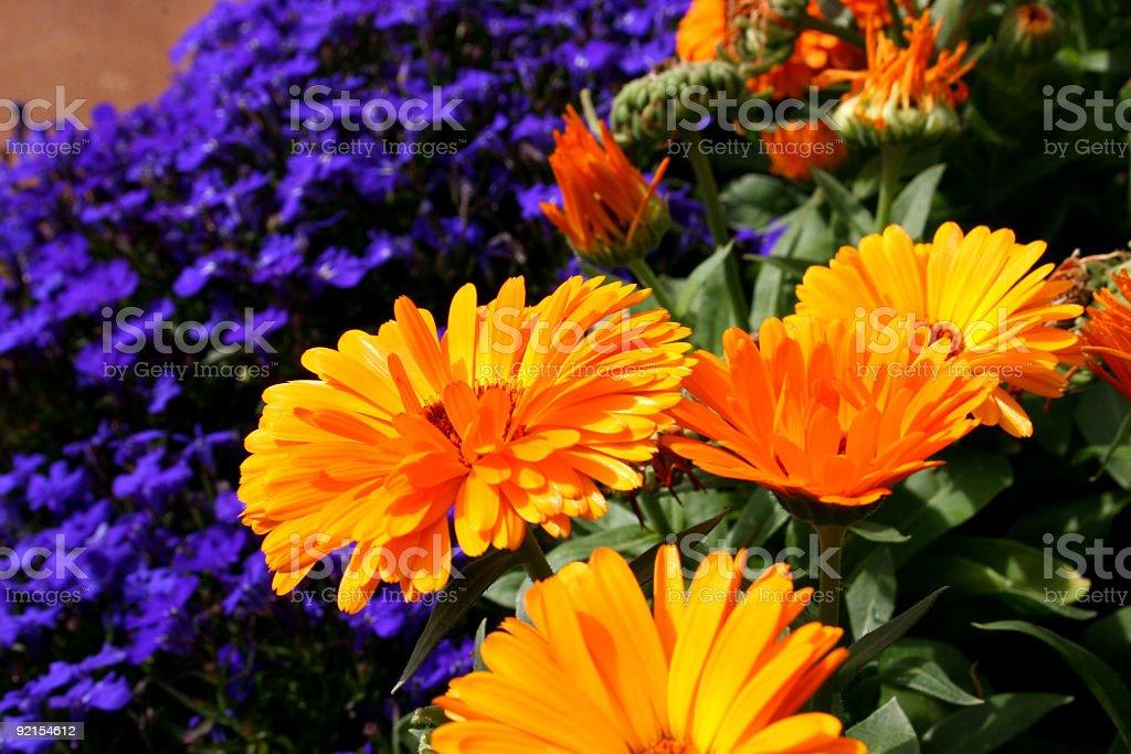 Spring flowers. stock photo