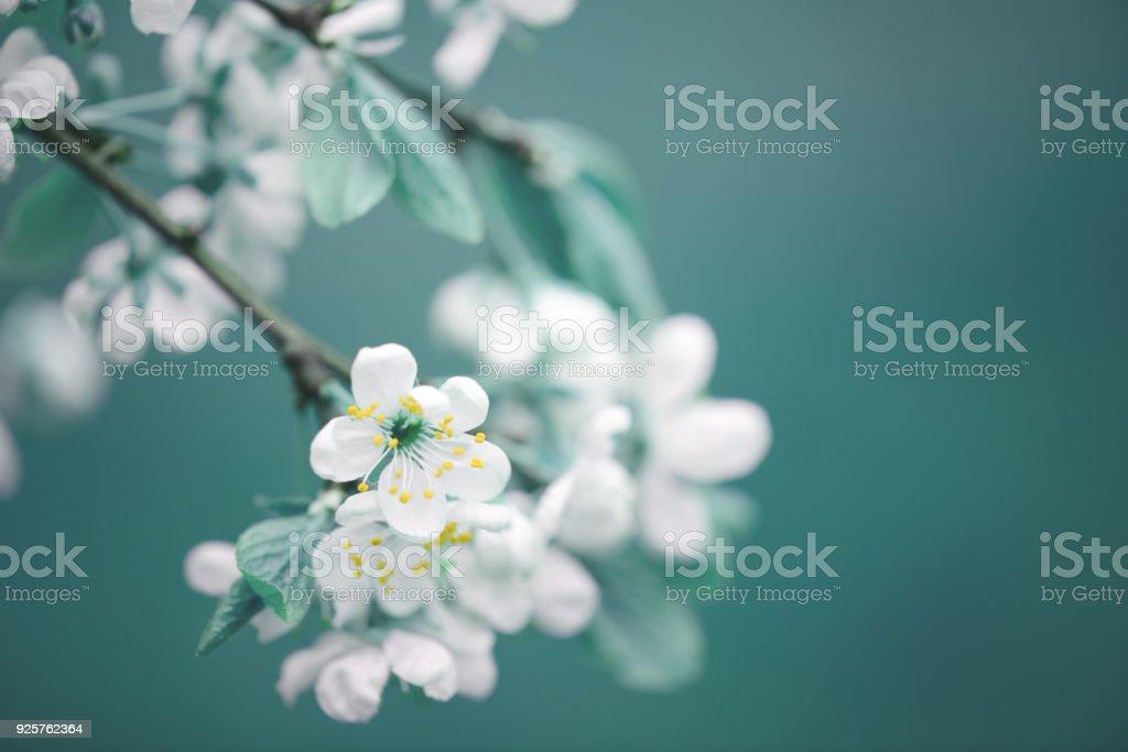 bahar çiçekleri - Royalty-free Ağaç Çiçeği Stok görsel