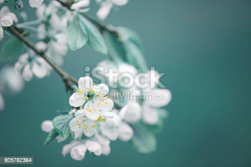 istock spring flowers 925762364