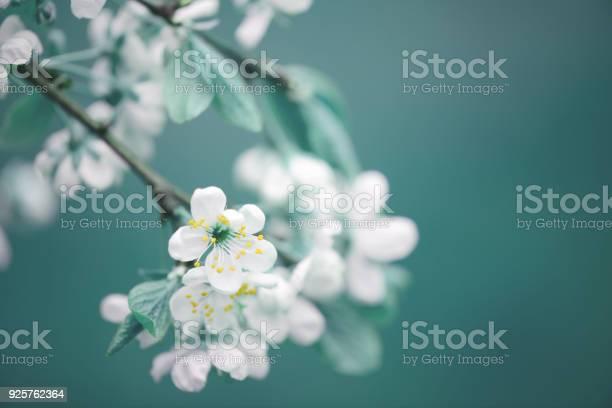 Spring flowers picture id925762364?b=1&k=6&m=925762364&s=612x612&h=v pycsafdcqfzkh8nz5buu4vbj91zde3f1ufp6yod3o=