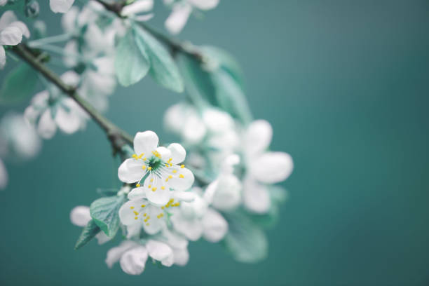 spring flowers - flowers stock pictures, royalty-free photos & images