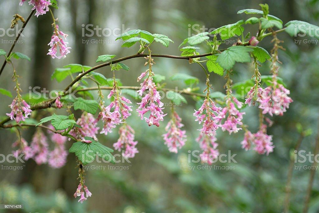 Frühling Blumen Lizenzfreies stock-foto