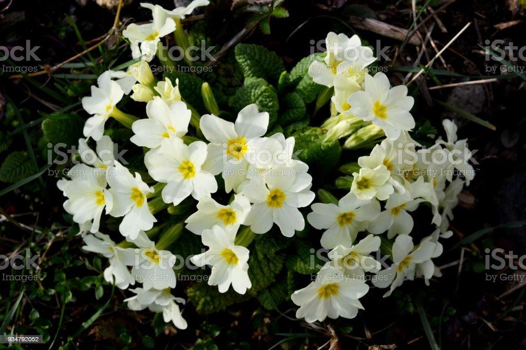 연두빛 꽃 - 로열티 프리 0명 스톡 사진