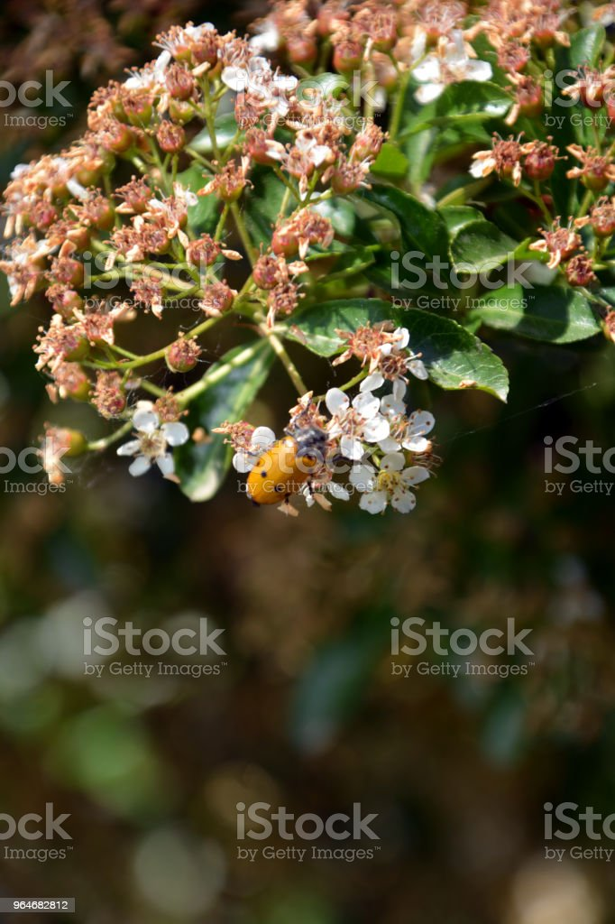 Fiori di primavera royalty-free stock photo
