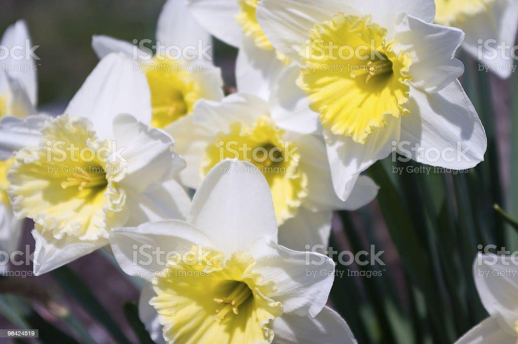 Fiori di primavera foto stock royalty-free
