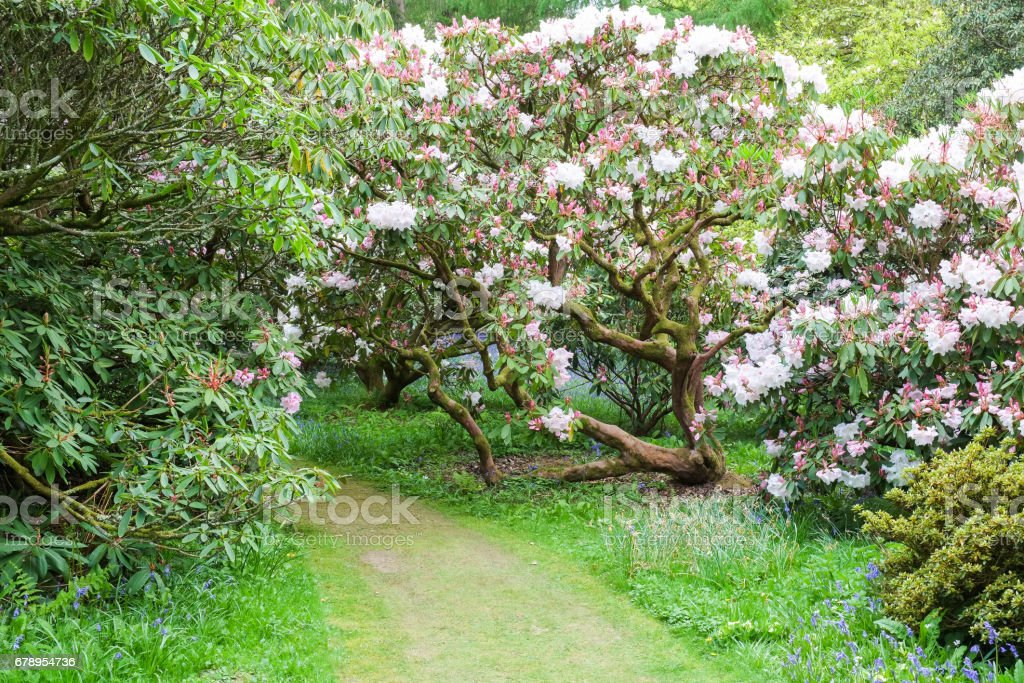 Spring Flowers Plants And Trees Of Southern England Stock Photo