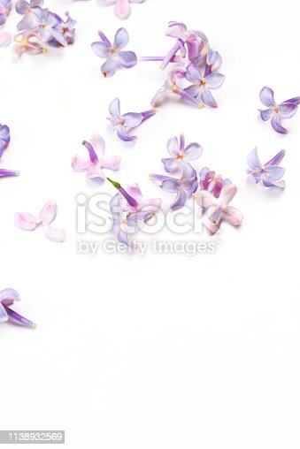 Spring flowers. Purple Lilac flowers blossom petals on white background. Top view, flat lay, copy space