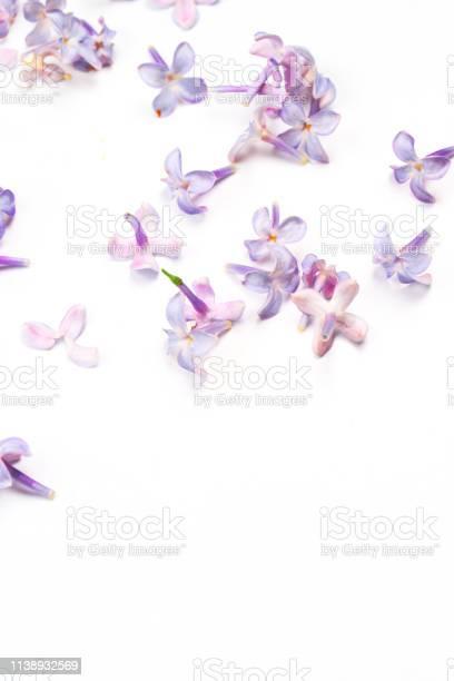 Spring flowers purple lilac flowers blossom petals on white top view picture id1138932569?b=1&k=6&m=1138932569&s=612x612&h=v2fs5jgslmqxg1ui njvdbzk6l1hvfoki2ba ayzrt0=