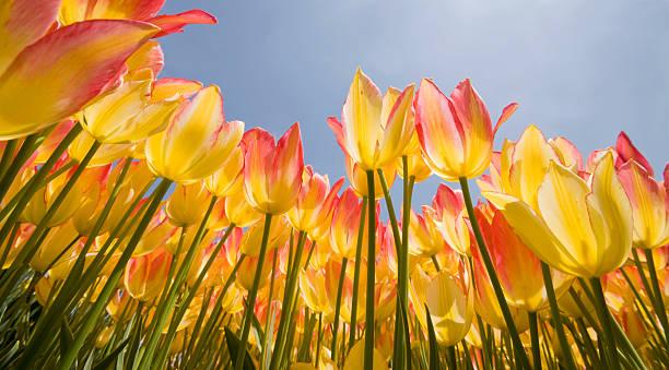 Spring flowers vernal equinox picture id121565751?b=1&k=6&m=121565751&s=612x612&w=0&h=thphroidzf8bzl2ewpcsi lzljla felts6ddnnr2ia=