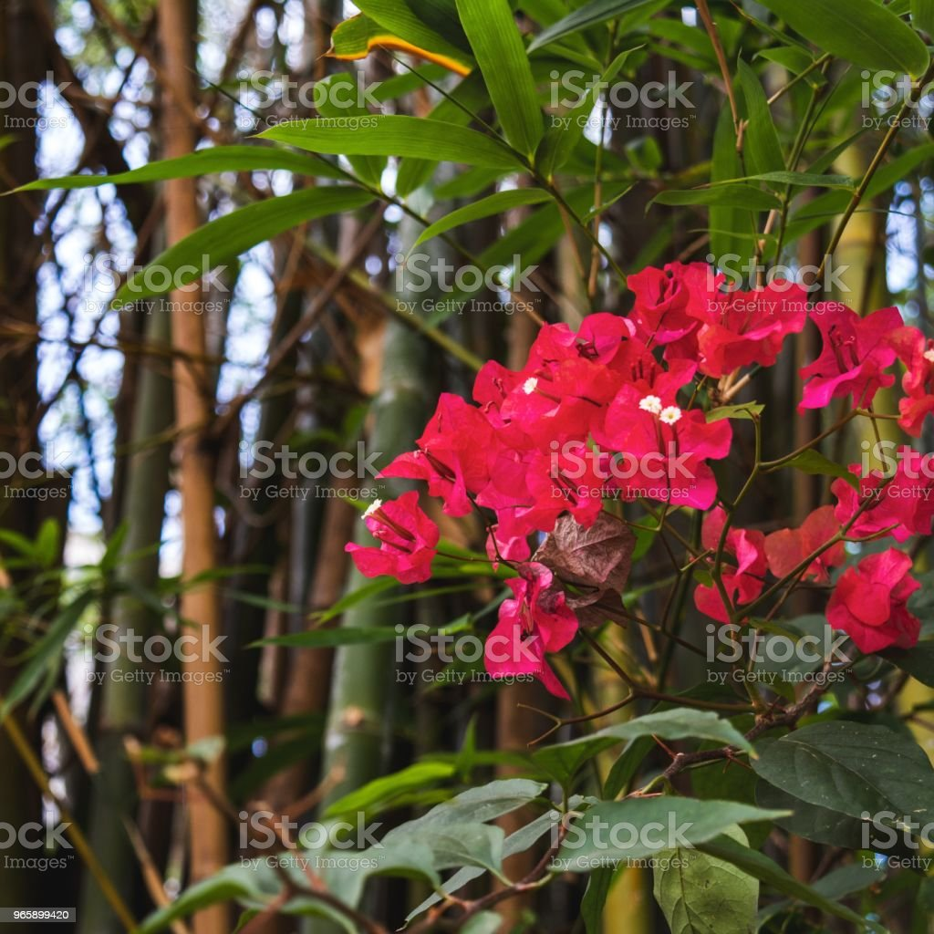 Spring flowers with a bamboo background - Royalty-free Bamboo - Plant Stock Photo