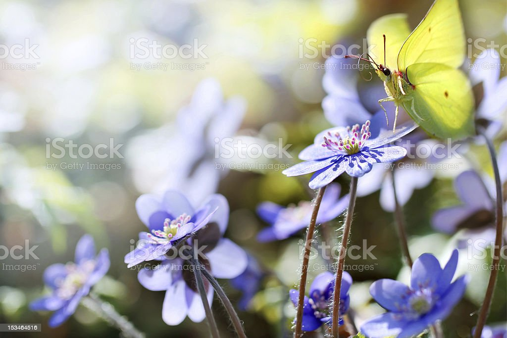 Spring flowers with butterfly stock photo