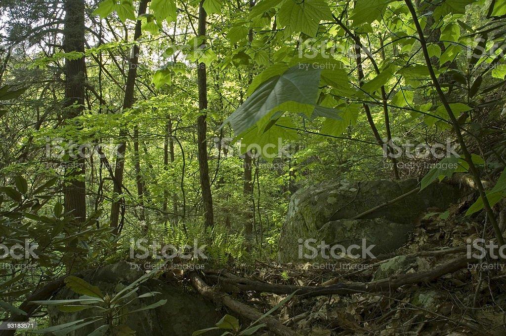 Spring Foliage, Great Smoky Mtns NP, TN royalty-free stock photo