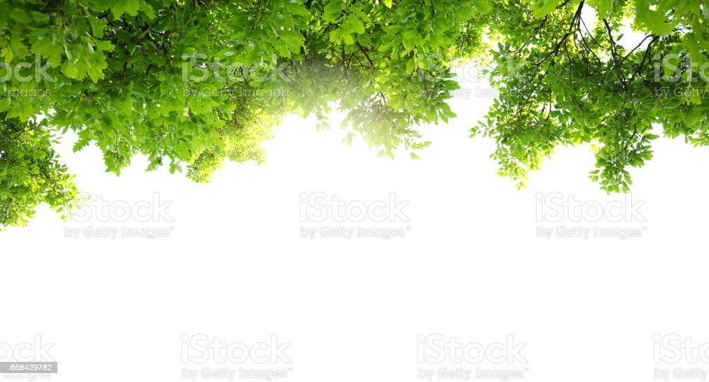 Spring Foliage Panoramic stock photo