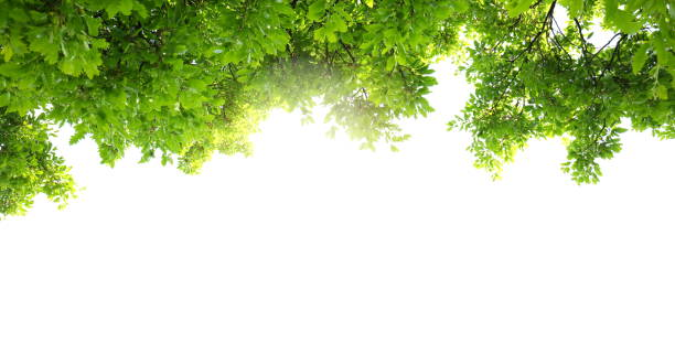 spring foliage panoramic - lush foliage stock pictures, royalty-free photos & images
