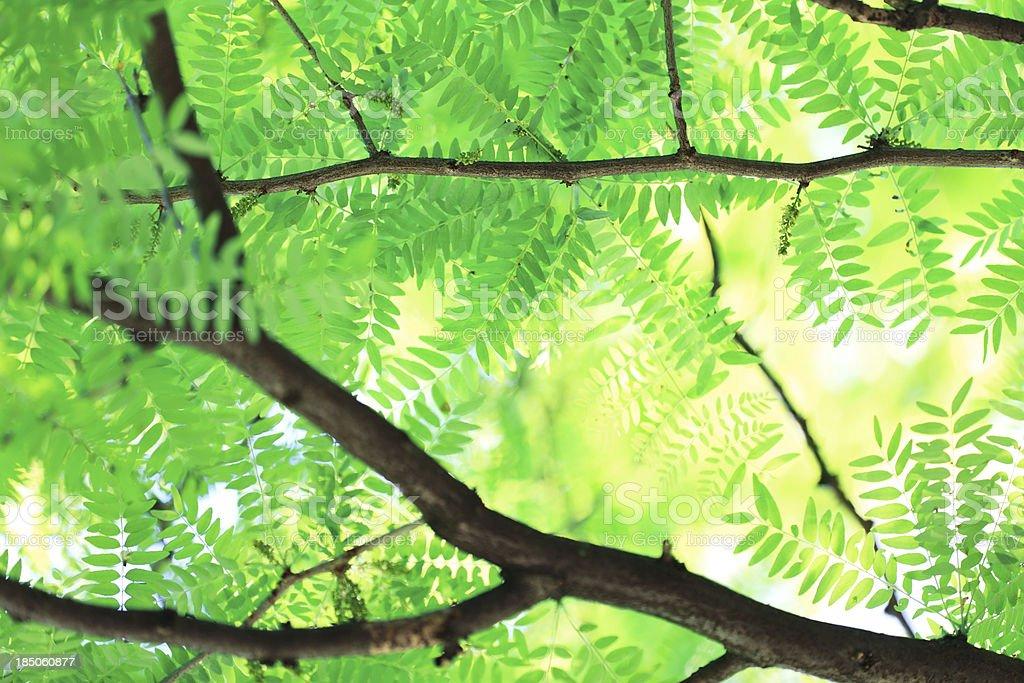 Spring Foliage royalty-free stock photo