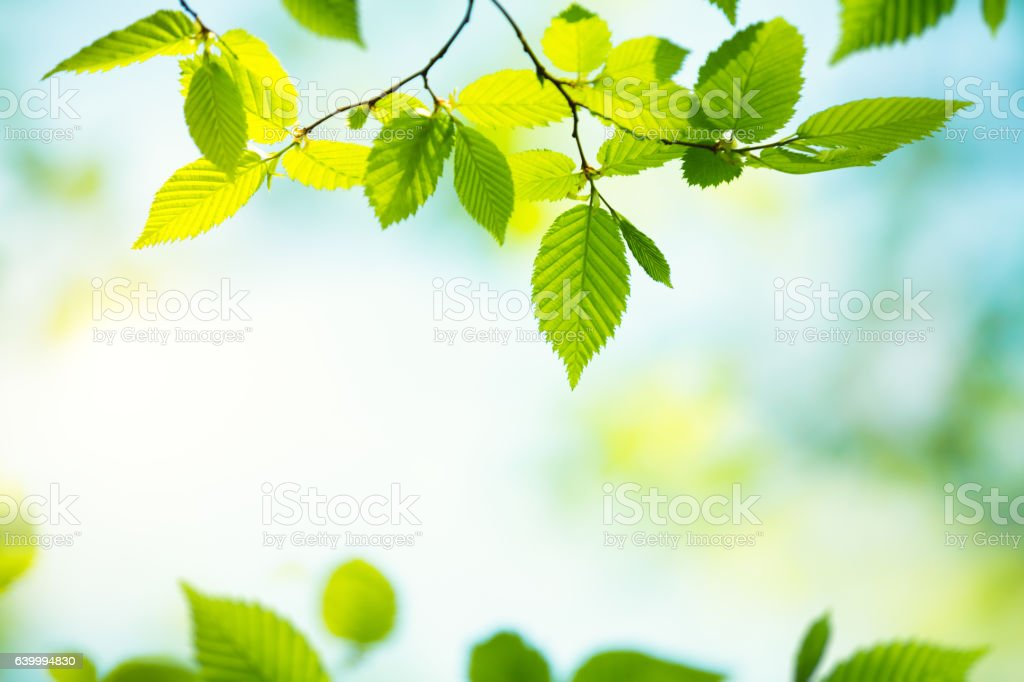 Spring Foliage stock photo