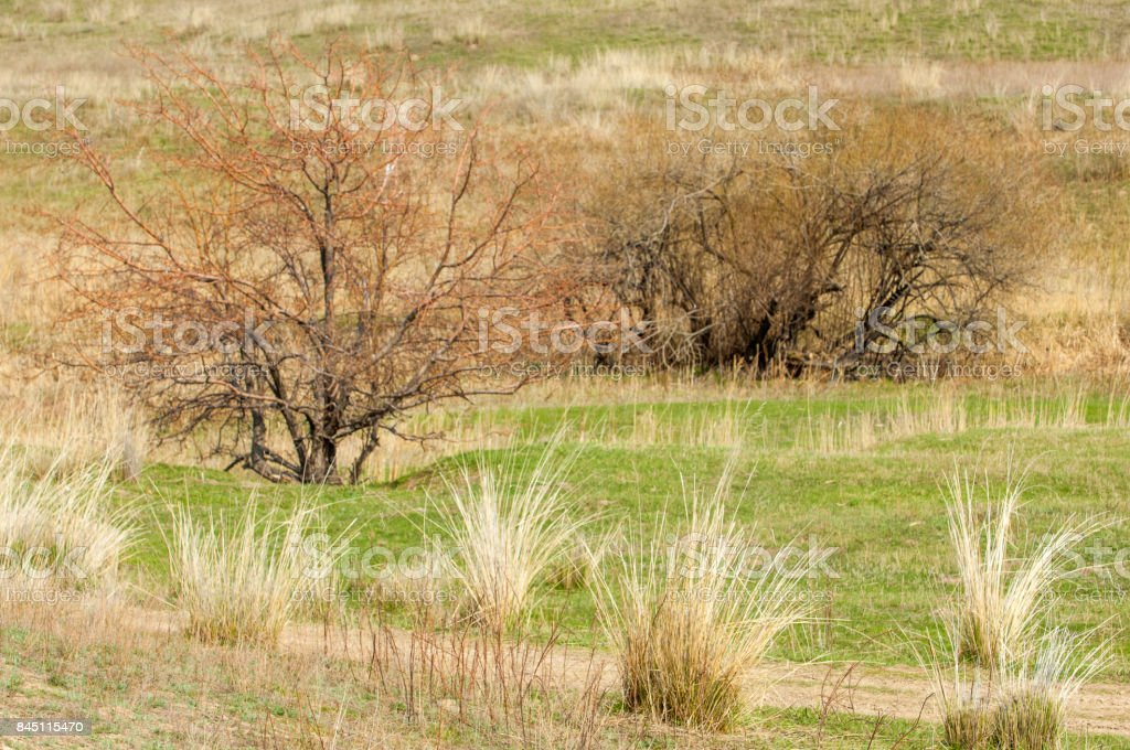 spring foothills stock photo