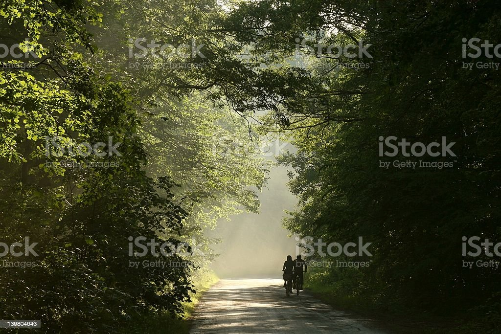 Spring forest after the rain royalty-free stock photo