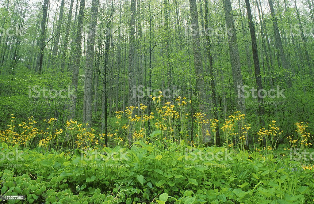 Spring Forest and Flowers royalty-free stock photo