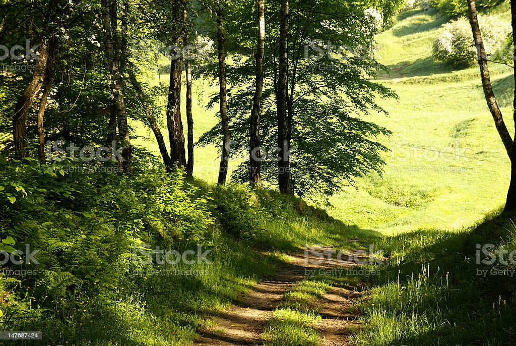 Spring forest background royalty-free stock photo