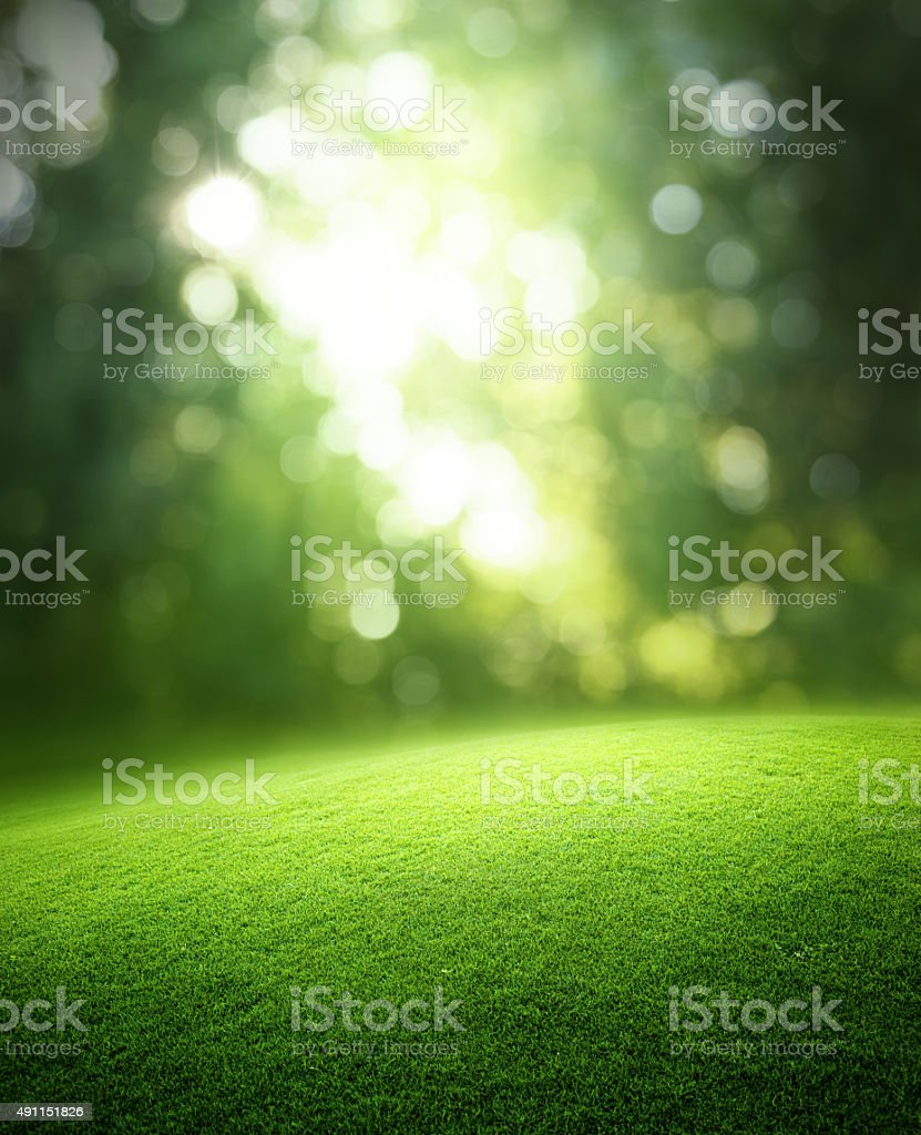 Spring forest  background stock photo