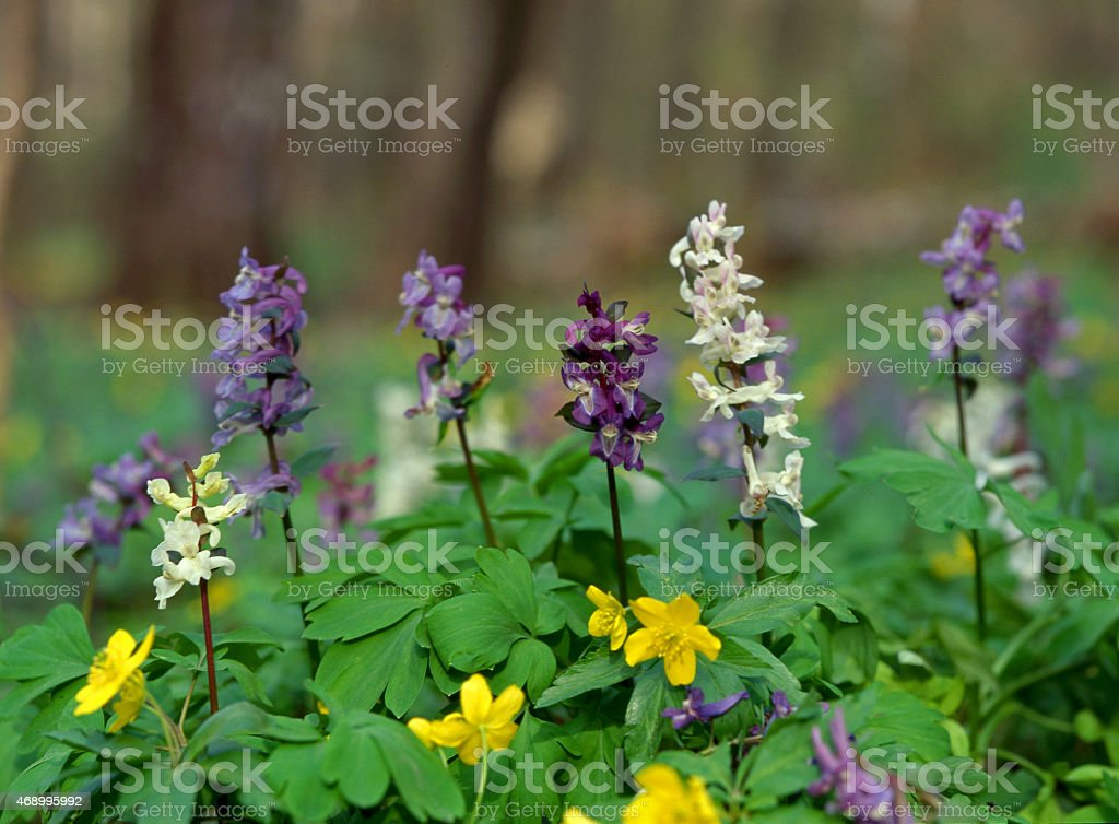 spring forest flowers stock photo