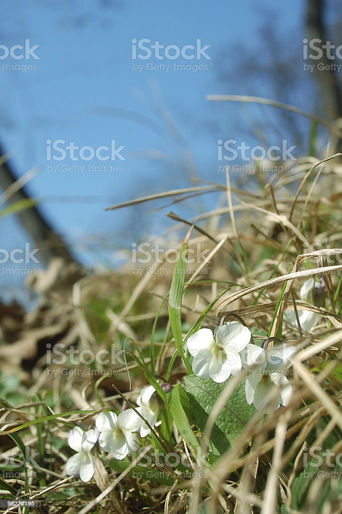 spring forest flowers royalty-free stock photo