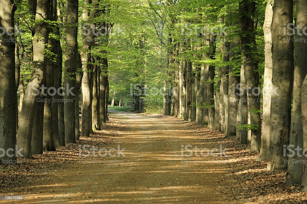 Spring forest in the Netherlands with lane royalty-free stock photo