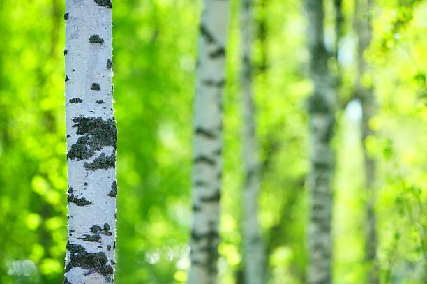 Frühling-Wald – Foto