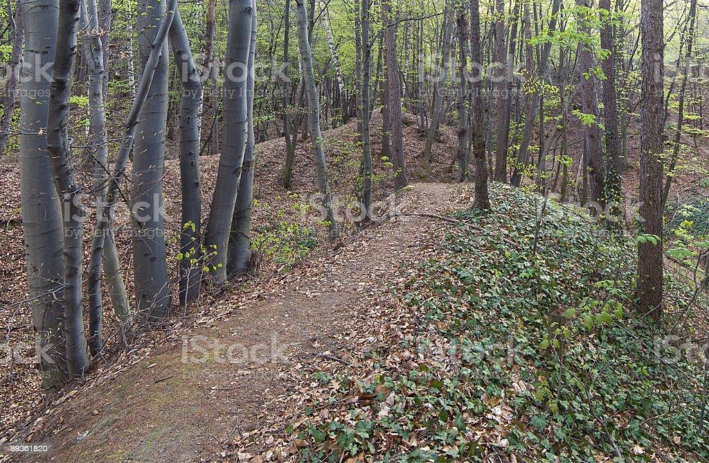 Foresta di primavera foto stock royalty-free