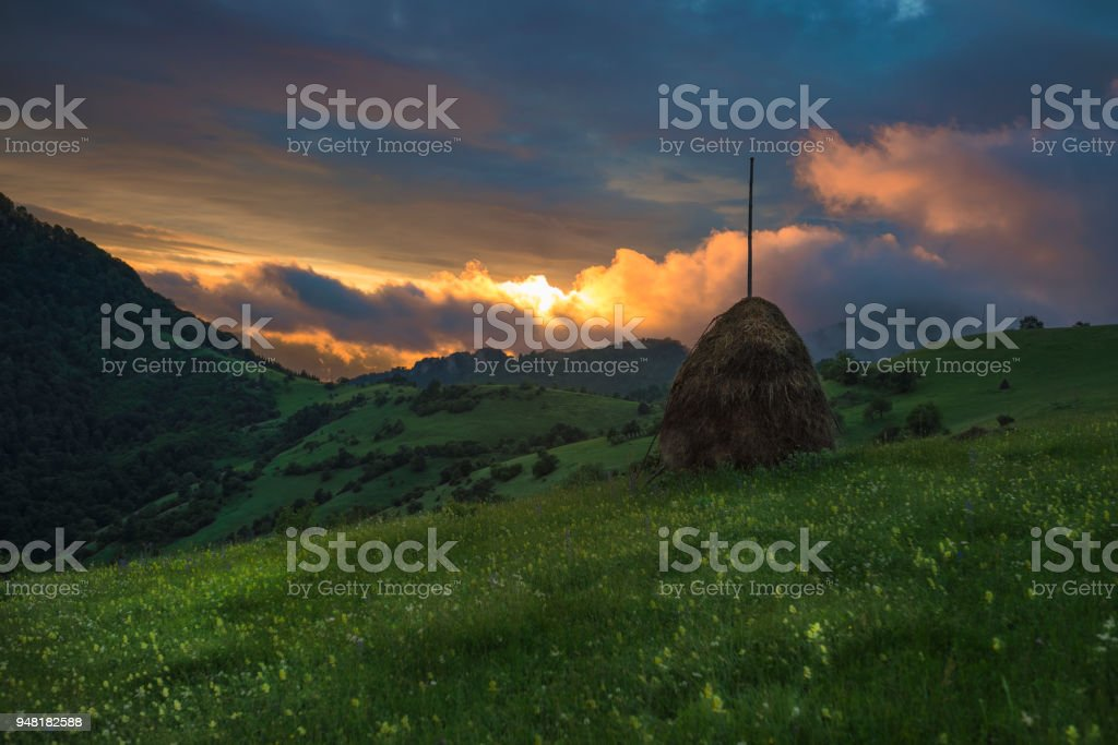 Spring forest themes stock photo