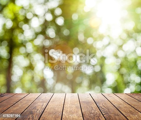 istock spring forest trees 478297164