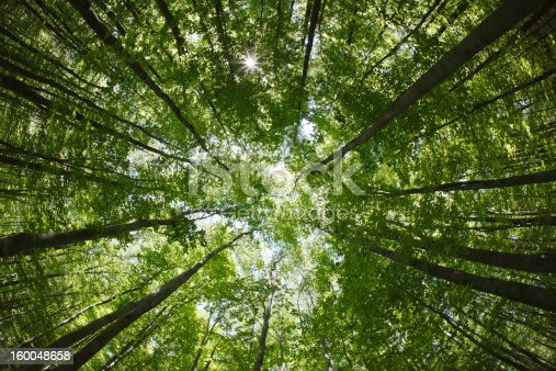 spring forest treetops (intentionally distorted image; shot with a fisheye lens)