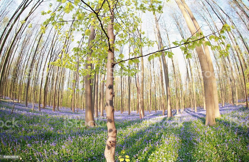 spring forest with many flowers stock photo