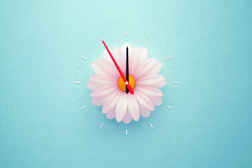 Single white daisy forming clock over teal background. Horizontal composition with copy space. Spring forward and daylight saving time concept.