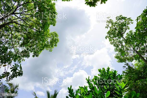 Photo of Spring Frame on sky background
