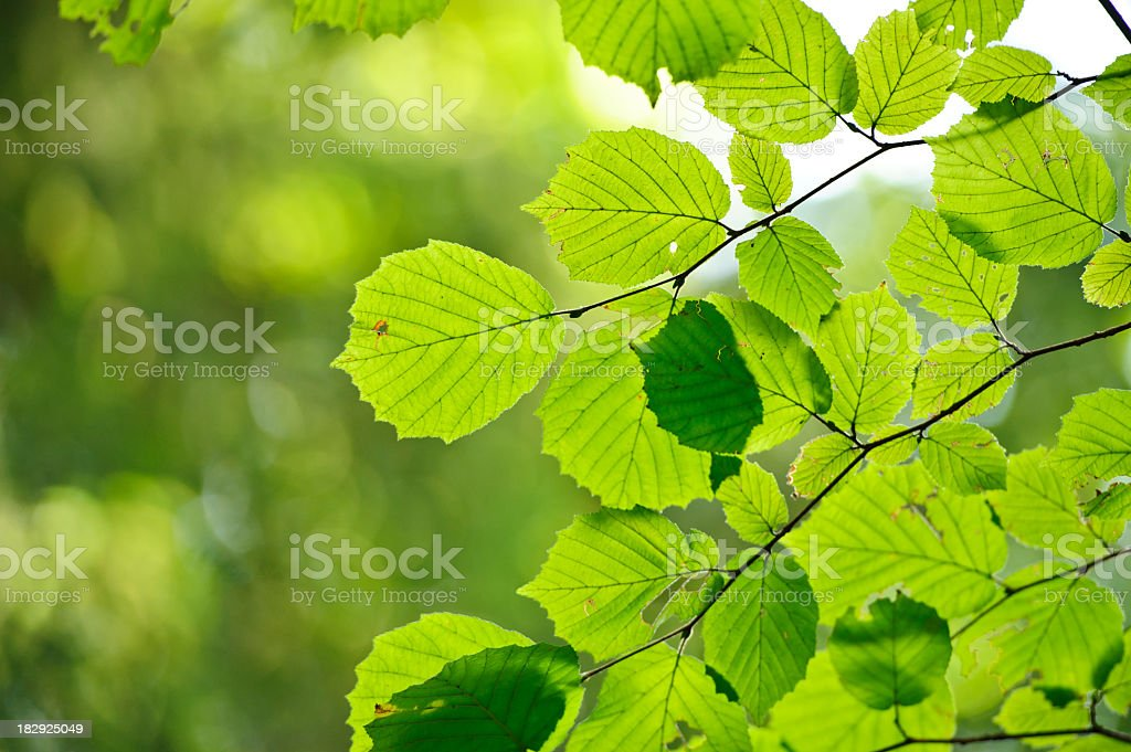 Spring frame royalty-free stock photo