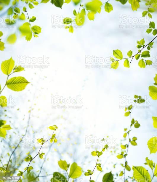 Spring frame picture id891978288?b=1&k=6&m=891978288&s=612x612&h=qkuwvabw03nhy816ho2 hklchz5t7mxjtb3eu6nixgw=