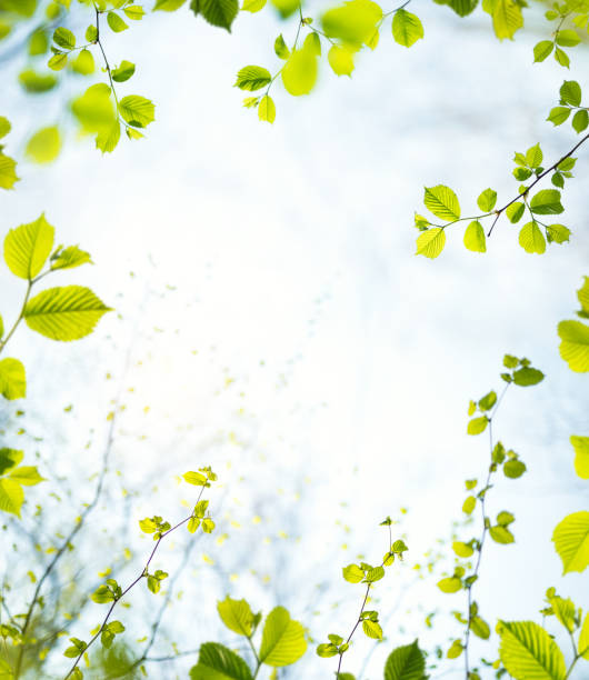 spring frame - lush foliage stock pictures, royalty-free photos & images