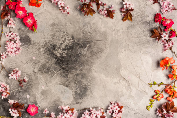 Spring frame Spring frame: branch with cherry and peach blooming flowers on aged grey stone background spa belgium stock pictures, royalty-free photos & images