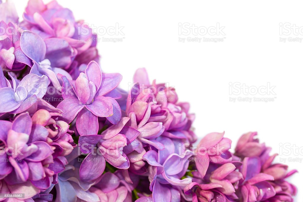 Spring frame with flowers of lilac. stock photo