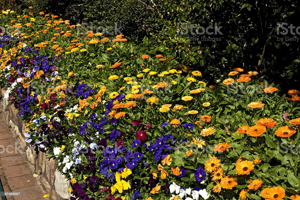 Spring garden flower bed royalty-free stock photo