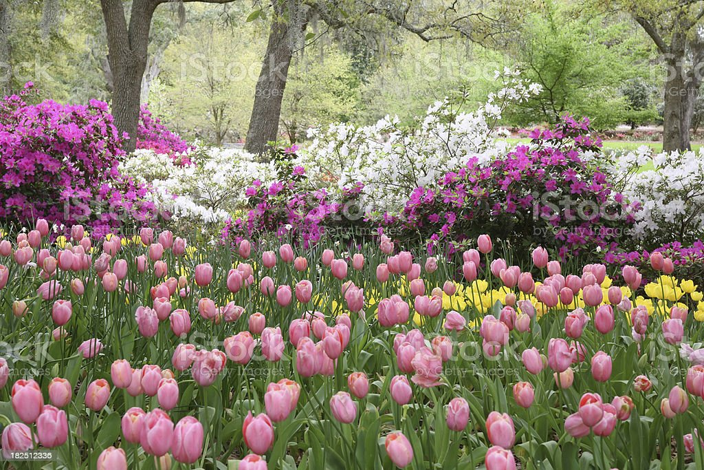 spring garden in bloom royalty-free stock photo